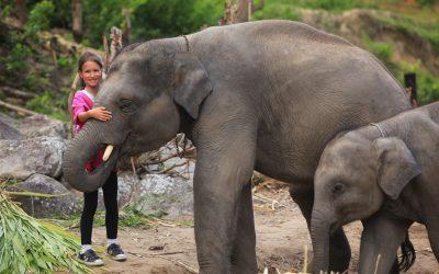 Dan sa slonovima