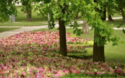 Objavljen novi datum ovogodišnjeg Floraarta