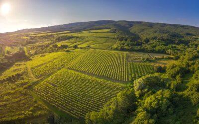 Ljetno osvježenje u Zlatnoj Slavoniji